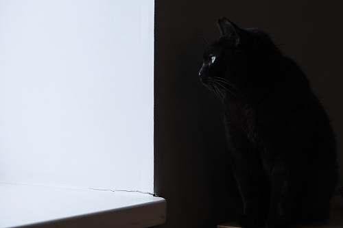 animal black cat cat