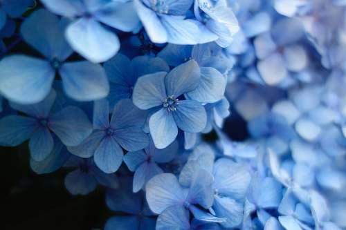 flower close up photo of blue petaled flower tokyo