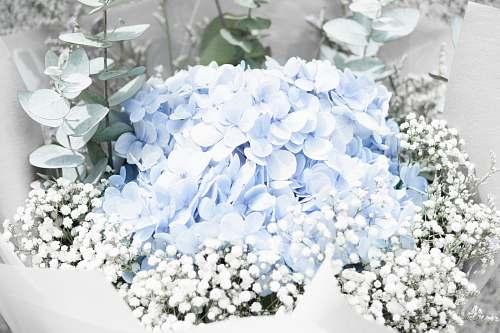 flower closeup photo of blue petaled flower arrangement flowers