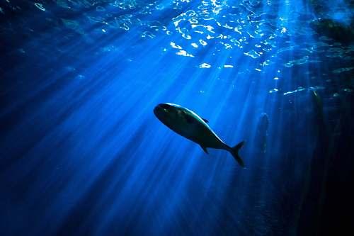 water fish under body of water aquarium
