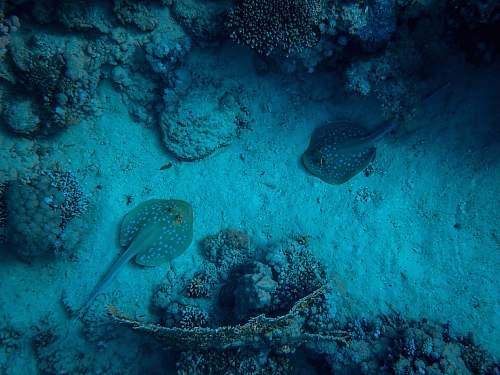 animal fish underwater fish