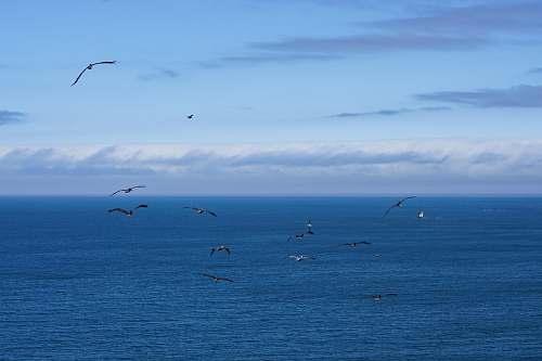 adventure flight of black birds above body of water leisure activities