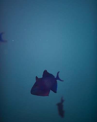 fish gray fish under water animal