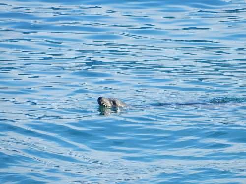 animal gray seal on body of water tamarack surf beach