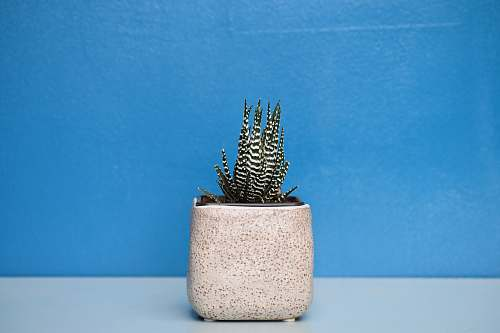 plant green and white succulent plant with beige pot cactus