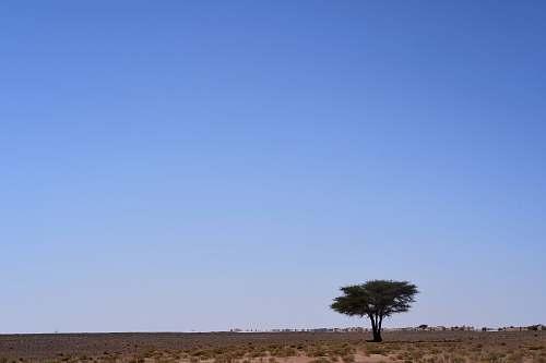 nature green tree in desert outdoors