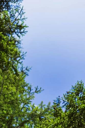 plant green trees under blue sky tree