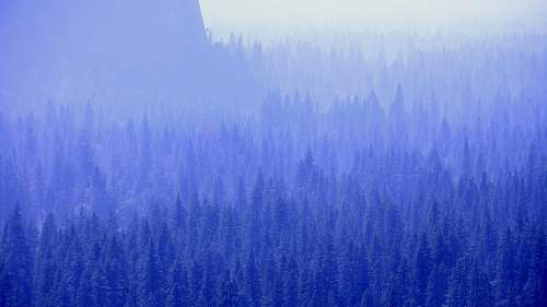 nature mountain with trees covered with fogs weather