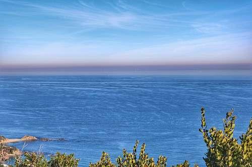 nature ocean blue and green tress ocean