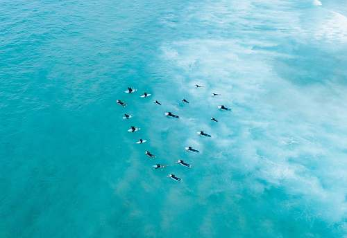 flock people surfing on body of water animal
