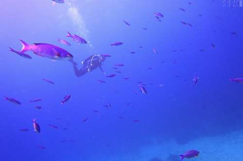 jamaica person diving body of water with fish water
