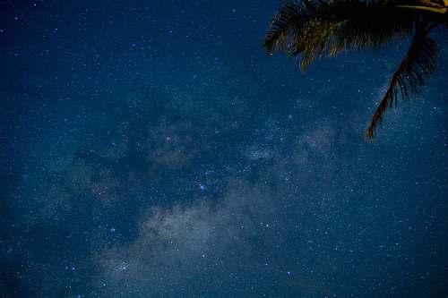 tree photo of sky full of stars stars