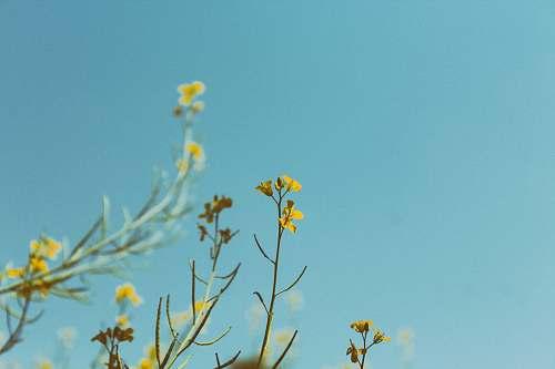 flower portrait photography of yellow petaled flower plant