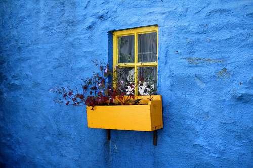 flower pot on window with flowers blue wall