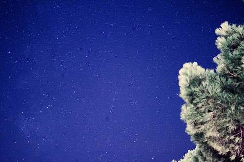 tree scenery of stars la rochelle