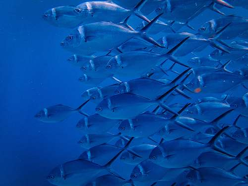 water school of grey fish aquatic