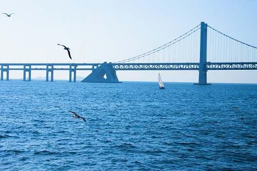 animal seagulls hovering over sea near bridge bird
