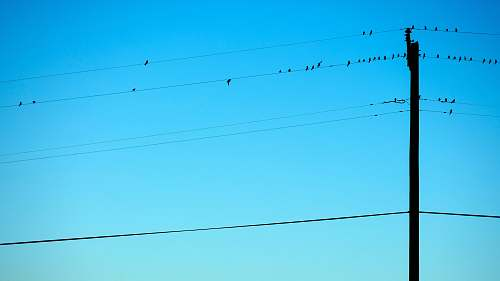 bird silhouette of birds on electric wires birds
