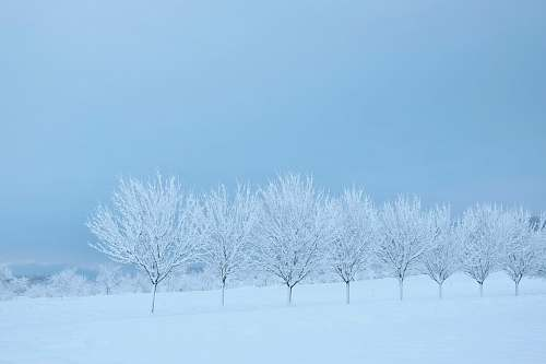 outdoors snow covered trees and grounds nature
