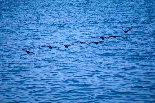 animal soaring birds over water bird