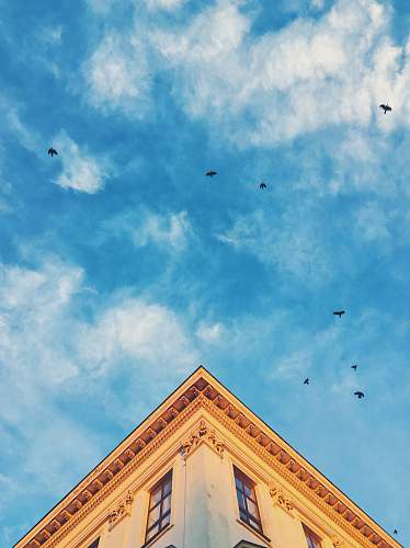 lviv time lapse photography of flying birds architecture