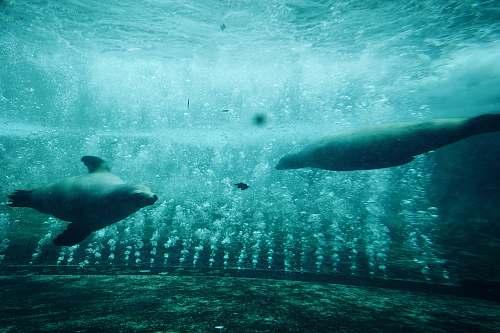 water two dugongs animal