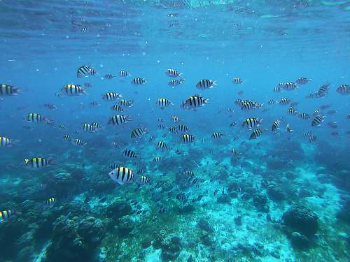 water under water photography of shoal of white and black fish ocean