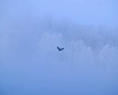 nature white bird flying on sky during daytime transportation