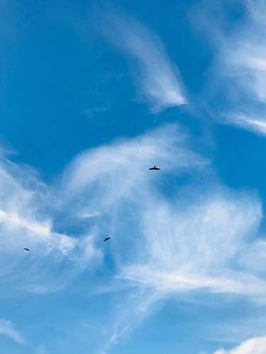 animal white clouds bird