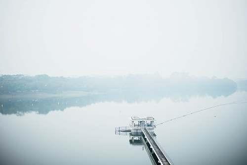 water white dock nature