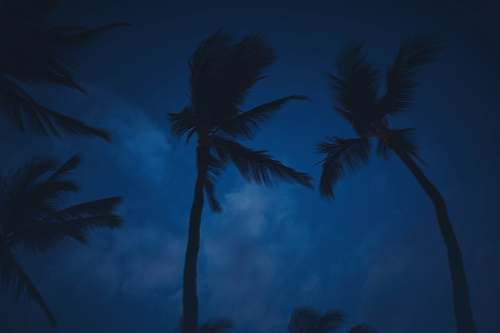 tree worm's-eye view of coconut tree palm tree