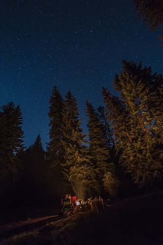 camping green forest at nighttime fire