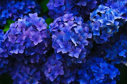 flower purple flowers plant
