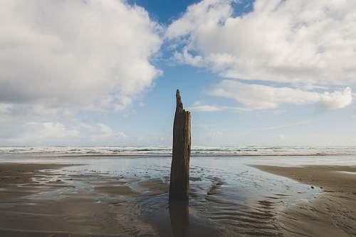 beach brown tree log standing on gray sand under cloudy sky sea