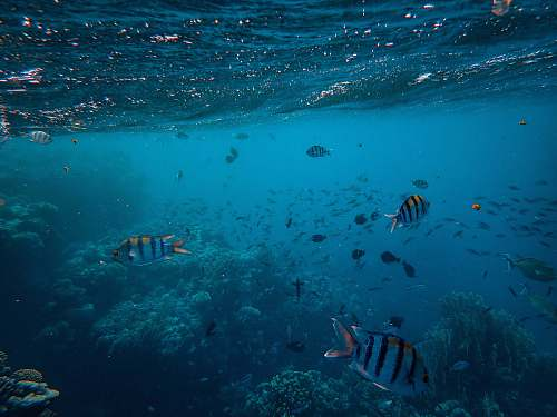 water striped school of fish underwater nature