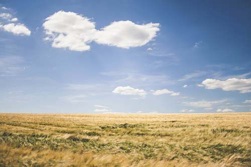 field brown grasses under white clouds at daytime grassland