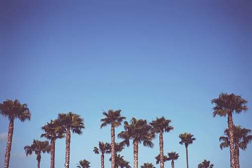 flora sago trees palm tree