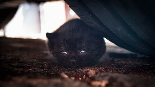 cat gray cat lying beside vehicle tire kitten