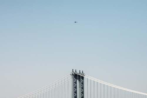 animal bridge at daytime flying
