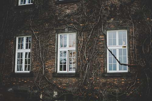 building white wooden framed glass panel windows on brown brick wall building ivy