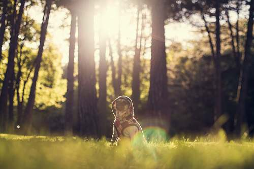 adorable selective focus photography of dog sitting on grass behind trees at daytime trees
