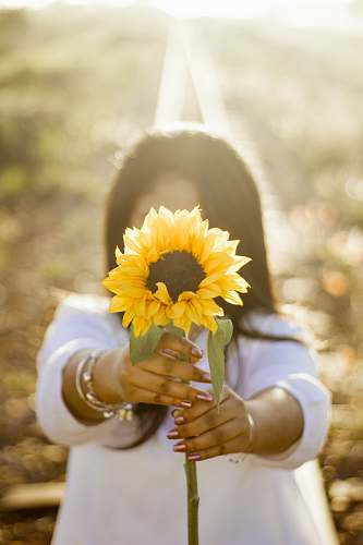woman woman holding up sunflower outdoor during daytime yellow