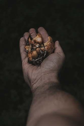 mushroom person holding mushrooms fraz. san pietro