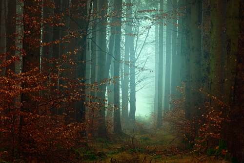 tree forest photography fog
