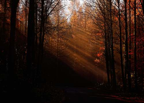 tree pine and bare trees lighted by sunlight nature