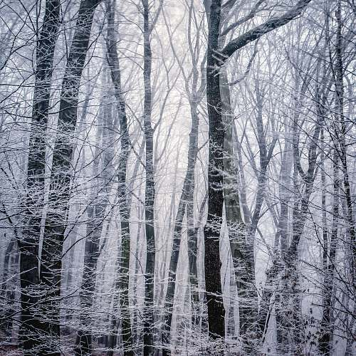 winter grayscale photography of trees frost