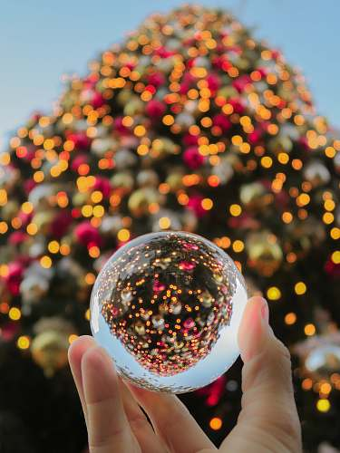 person person holding baoding ball tree