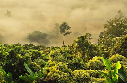 tree photo of green forest with fog forest