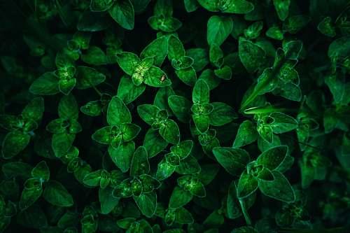 fractal green-leafed plants ornament