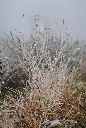 outdoors beige plants ice
